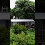 Tree House in Okinawa, Airbnb tour in Japan #shorts