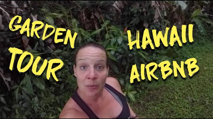 Hawaii AirBnB Garden Tour (Exploring Nānāwale Forest Reserve – Pahoa)